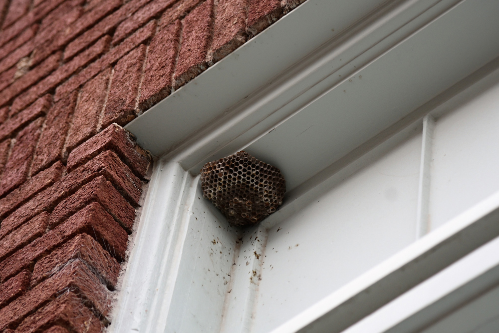 How to remove wasps nest around a window frame