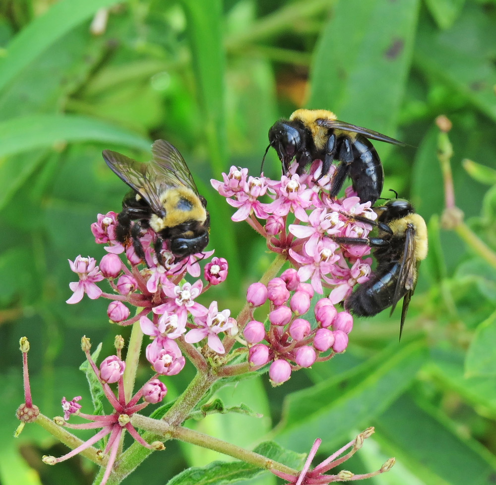 Why call professionals for a carpenter bee infestation